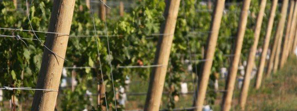 Vineyard Trellis Posts Orchard Trellis Poles